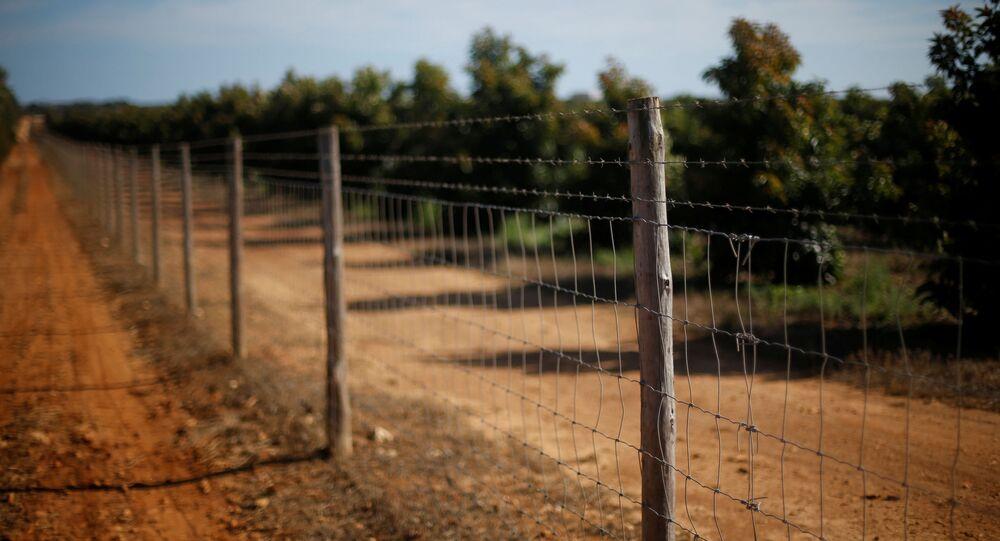 مزرعة أفوكادو، في منطقة ألغارفي (أو بالعربية: الغرب) بالقرب من لاغوس، البرتغال 5 أكتوبر 2020