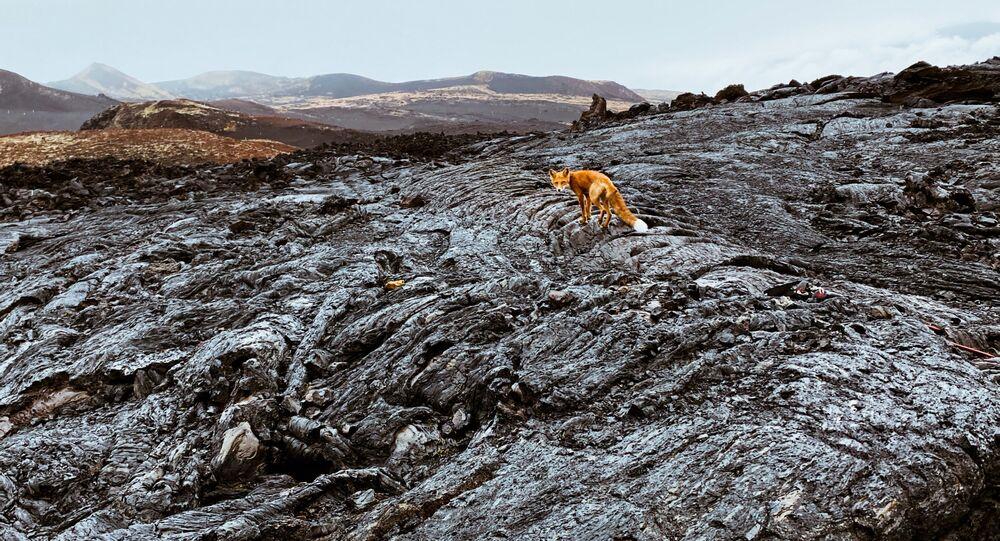صورة من سلسلة البركان، للمصور الروسي فيودر سافينتسيف، الفائزة في فئة الطبيعة المحترفة في مسابقة جوائز سوني العالمية للتصوير الفوتوغرافي 2021