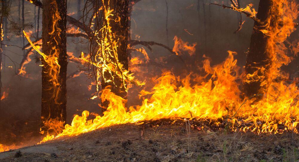 حرائق الغابات في منطقة تيومين، روسيا 15مايو 2021