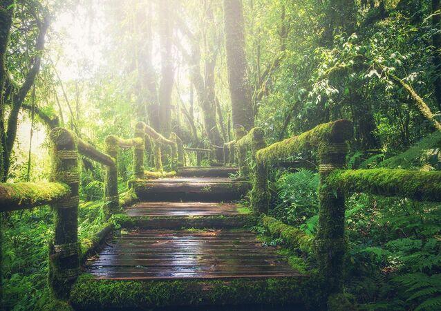 غابة خضراء