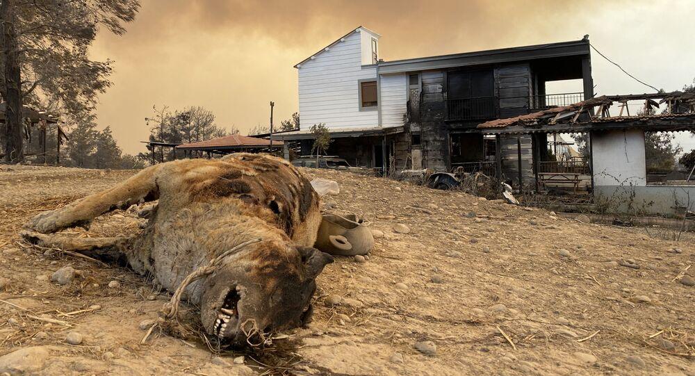 أهالي و حيوانات المناطق المتضررة من حرائق الغابات في تركيا، 29 يوليو 2021