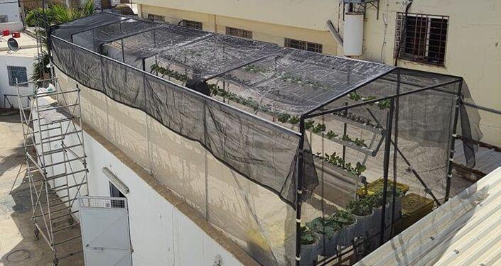 زراعة أسطح المنازل في تونس