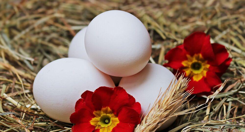 البيض غير المدجن في مزرعة بيض