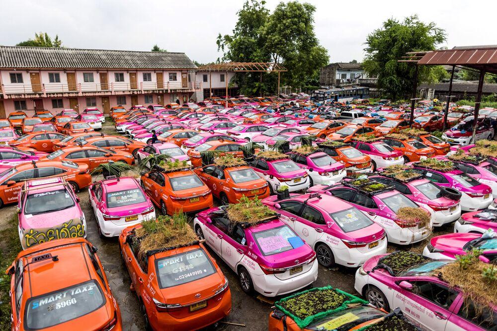 حدائق الخضروات على أسطح سيارات شركة مرآب لتأجير سيارات الأجرة، والتي أصبحت سياراتها خارج الخدمة حاليًا بسبب الكساد الاقتصادي الناجم عن وباء فيروس كورونا كوفيد-19، في بانكوك في 15 سبتمبر 2021.