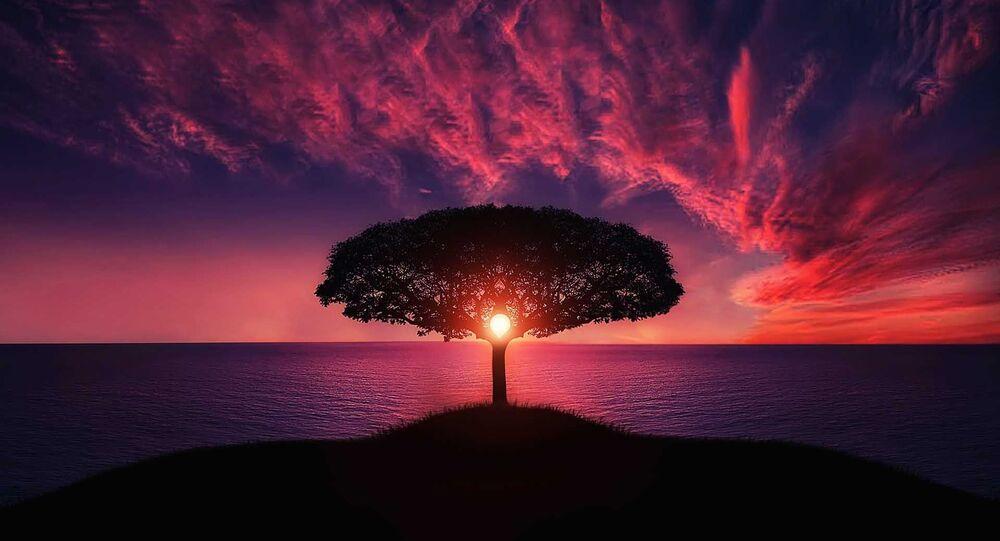شجرة عملاقة في الغروب