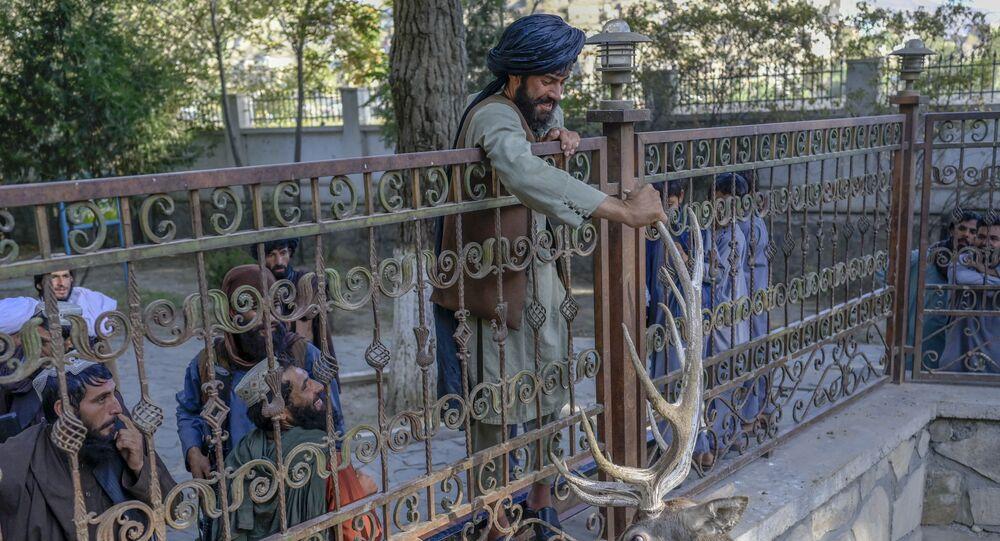 أحد مسلحين حركة طالبان يحاول لمس قرن غزال في حديقة حيوانات في كابول، أفغانستان، 17 سبتمبر 2021