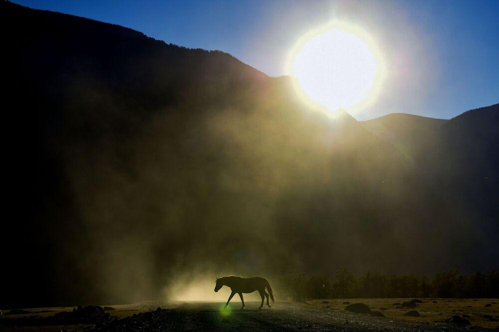 حصان يرعى بالقرب من طريق سريع في وادي نهر تشوليشمان في جمهورية ألتاي الروسية