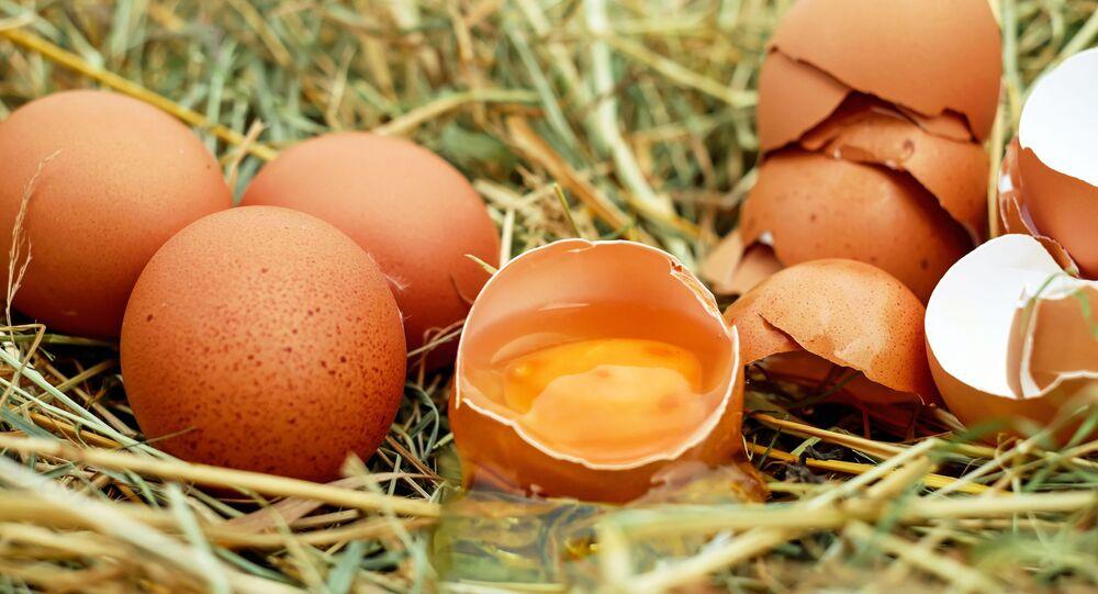 بيض في عش دجاج