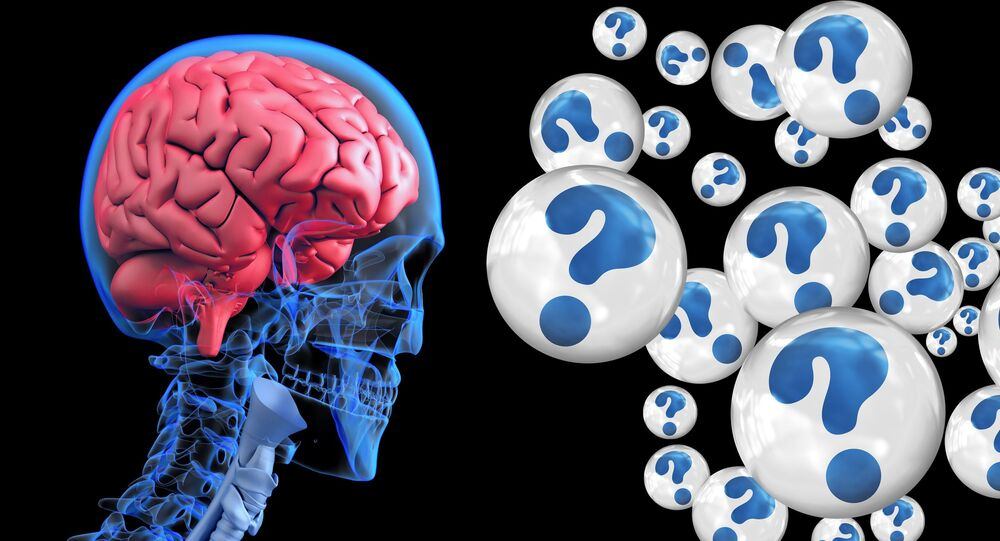 الدماغ البشري