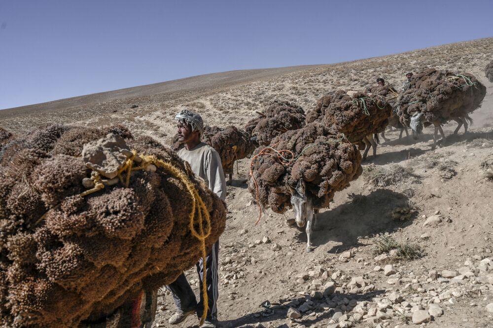 رعاة يرافقون حميرهم المحملين بالشجيرات التي تم جمعها لفصل الشتاء، بالقرب من بحيرة بان أمير في محافظة باميان، أفغانستان 4 أكتوبر2021