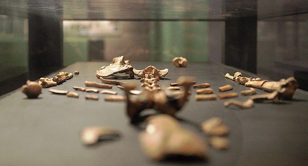 نسخة طبق الأصل للهيكل العظمي لوسي في افتتاح المعرض الدائم الجديد بالمتحف الوطني الإثيوبي، 3 ديسمبر/ كانون الأول 2014