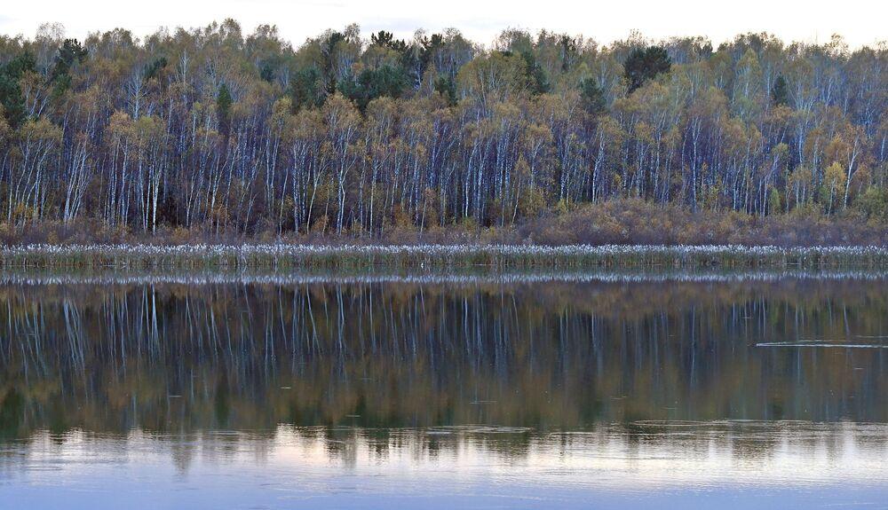 منظر لإنعكاس الأشجار في مياه نهر إركوتسك في إقليم كراسنويارسكي كراي الروسي، 30 سبتمبر 2021