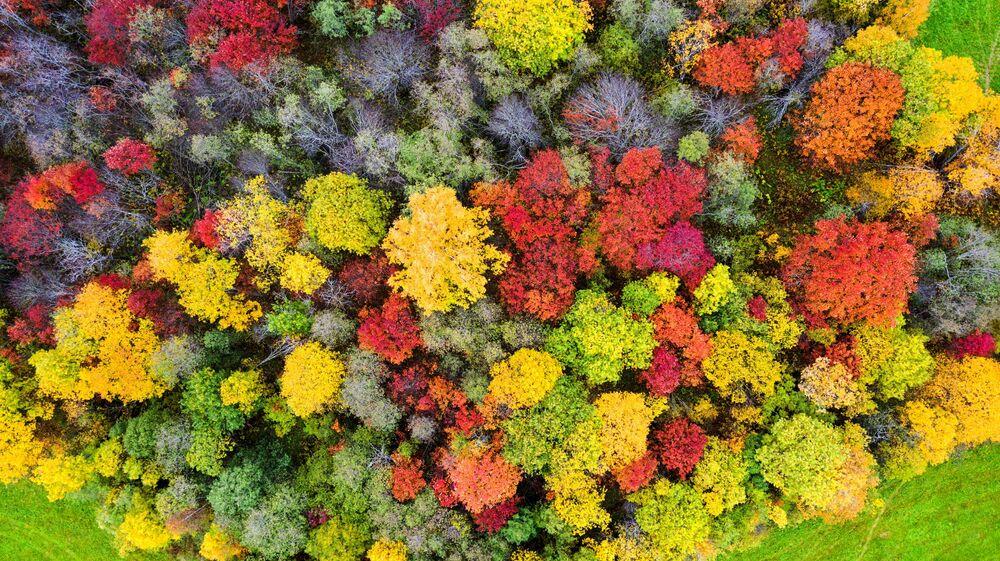 غابات تتلون بألوان فصل الخريف في حي بريونيجسك في جمهورية كاريليا الروسية، 2 أكتوبر 2021