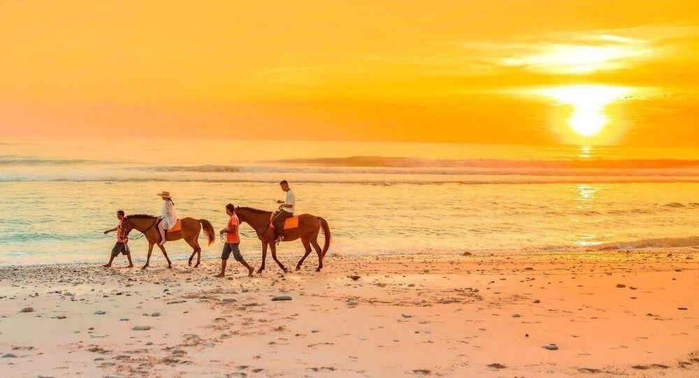 خيول نيهي سومبا - إندونيسيا