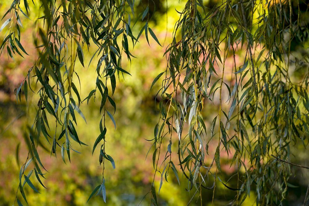 تنعكس الأشجار التي بدأت بعض الأوراق في تغيير ألوانها في بركة، في بتلر، بنسلفانيا 8 أكتوبر 2021