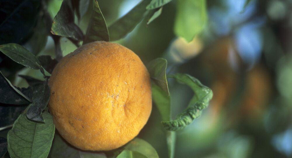 برتقال