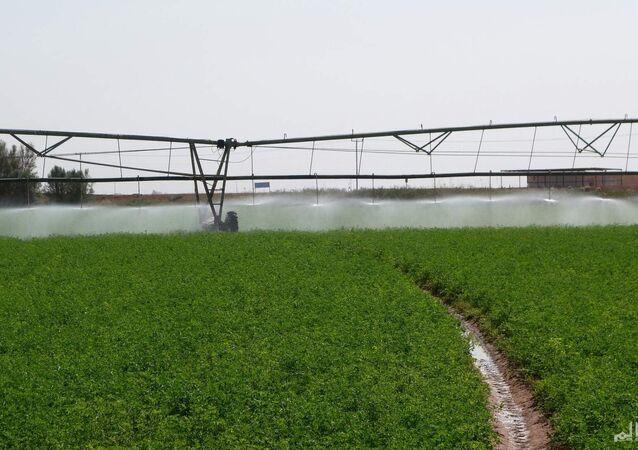 أراضي زراعية في السودان