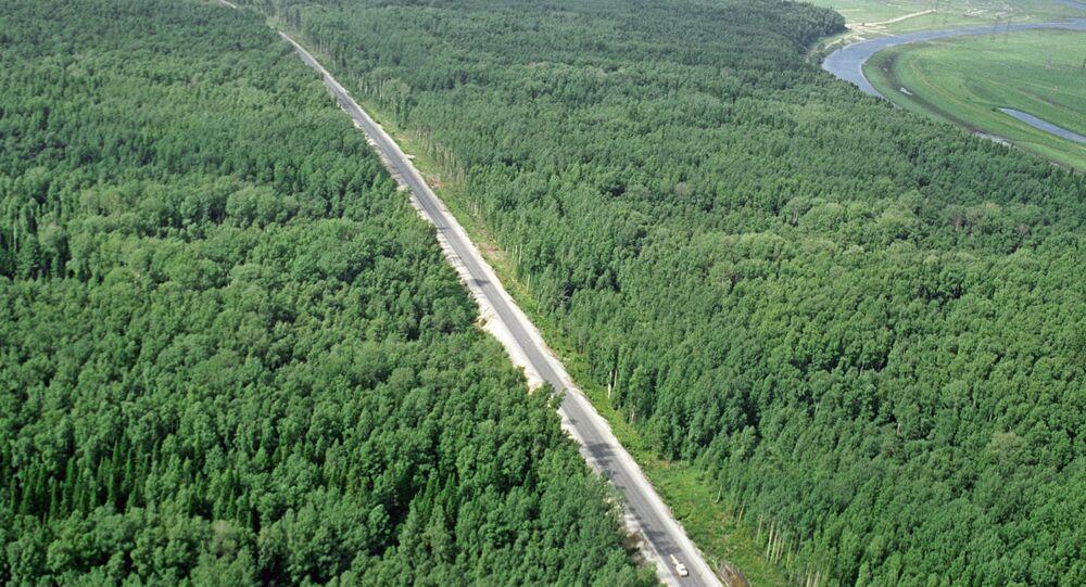 غابات الـتايغا الروسية
