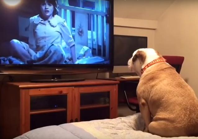 كلب يشاهد فيلم رعب