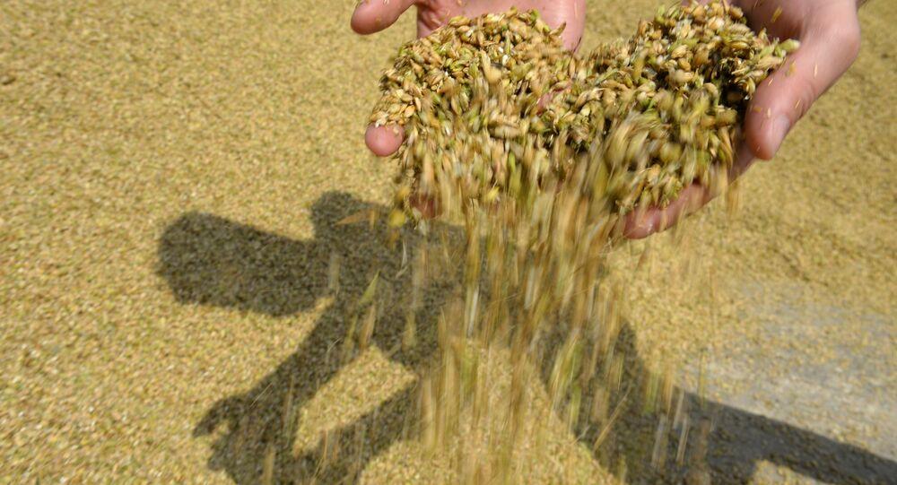 حصاد زراعة حبوب