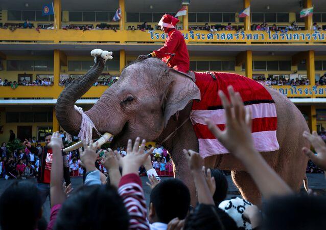 أفيال ترتدي زي بابا نويل في تايلاند، الجمعة 22 ديسمبر/ كانون الأول 2017