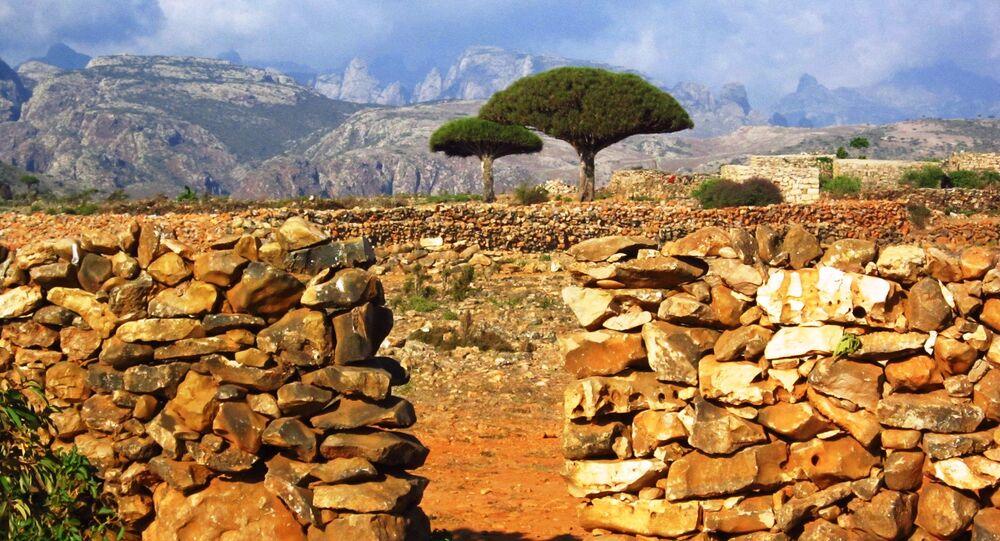 جزيرة سقطرى في اليمن