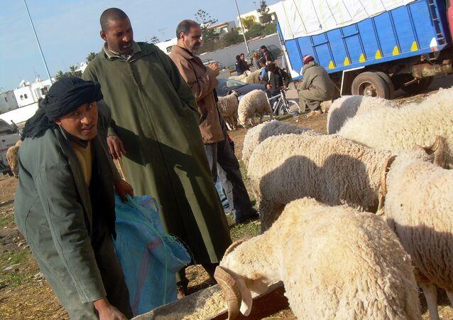 عيد المغرب.. التباهي بحجم الخروف والاقتراض لإتمام فرحة العيد