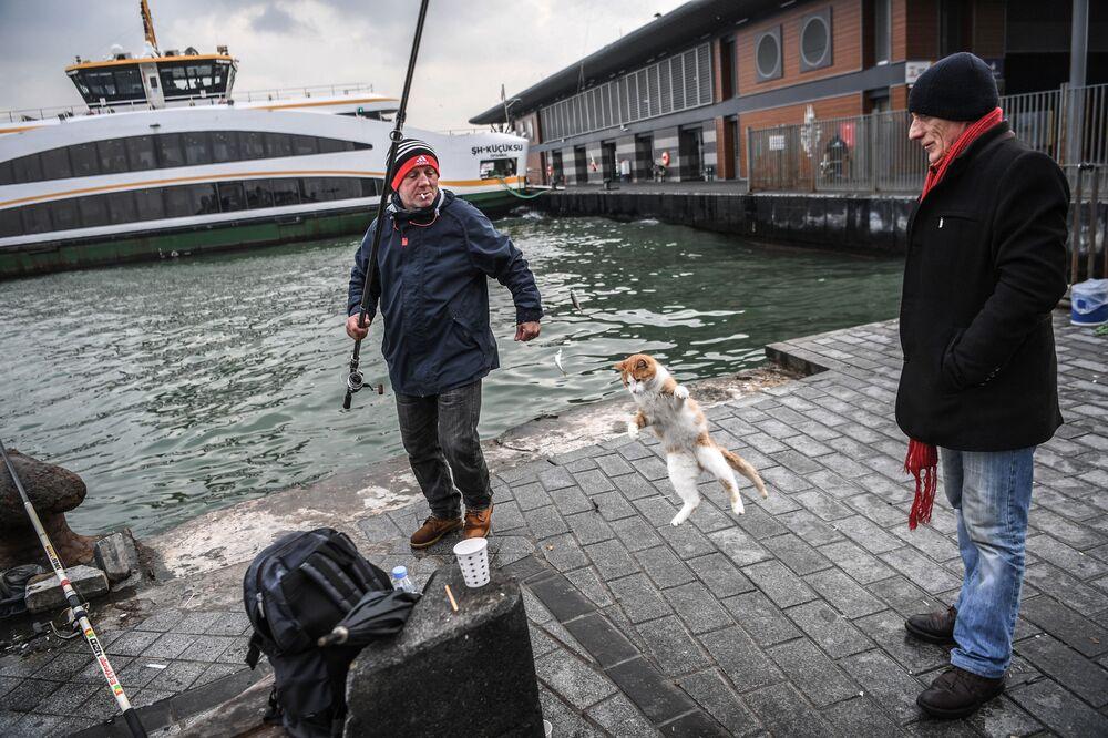 قط يقفز للإمساك بالسمكة التي اصطادها الصياد في خليج البوسفور، اسطنبول، تركيا 12 ديسمبر/ كانون الأول 2018