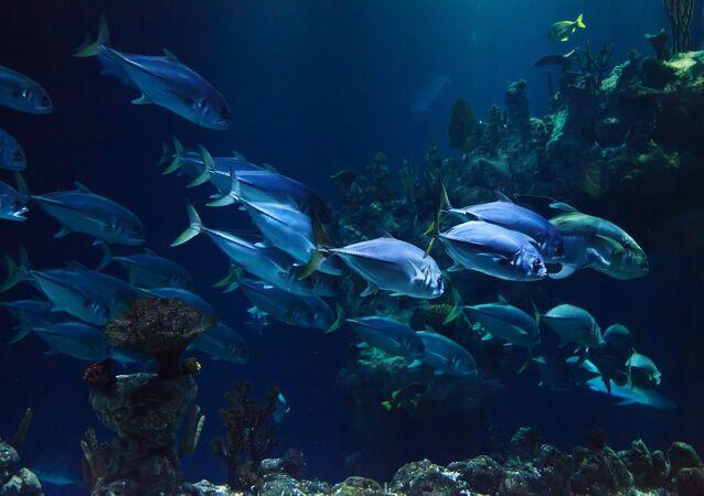 عمق البحر سمك