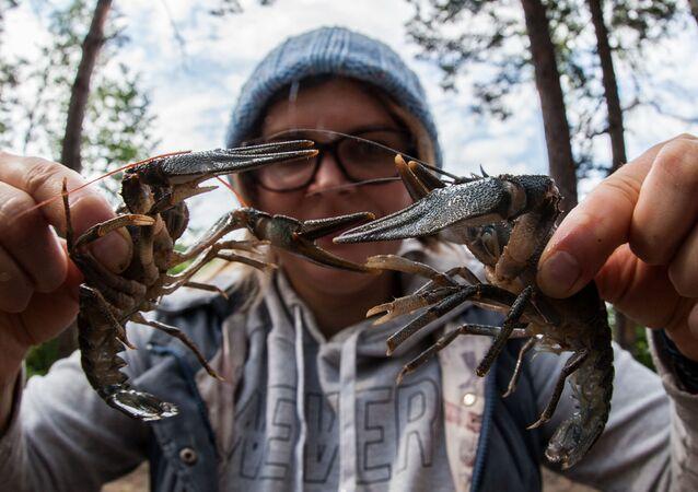 فتاة تحمل سرطانات البحر جمعتهما على بحيرة بيلويه في منطقة ريازان الروسية