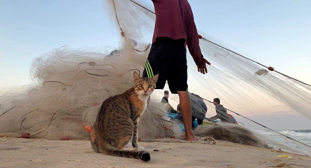 قط على خلفية صياد فلسطيني يجر شبكة الصيد على شاطئ بحر غزة، شمال طاع غزة 23 سبتمبر 2019