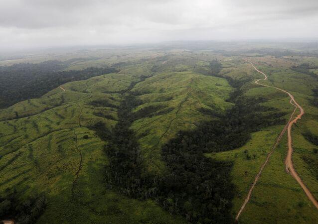 قطع غابات الأمازون