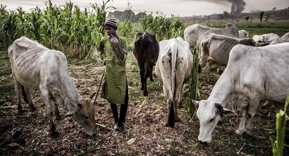 صورة بعنوان  دخان المراعي المشتعلة. حصاد المصيبة، للمصور الإسباني لويس تاتو، في فئة كوكبي. سلسلة صور.، ضمن القائمة القصيرة لمسابقة أندريه ستينين التصوير الصحفي المحترف